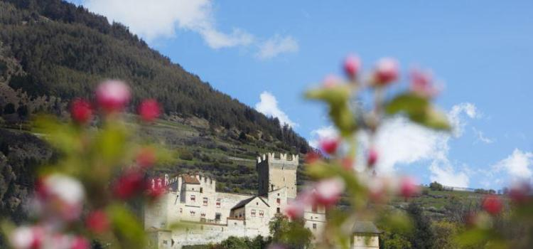 fb-vinschgau-churburg-bluete