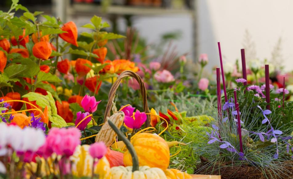 event-blumenmarkt-glurns-obervinschgau-gm